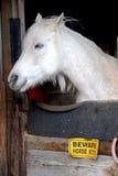 fleabitten серый цвет Стоковые Фотографии RF