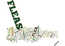 Fleas A Common Resident In Every House Text Background Word Cloud Concept Stock Photography