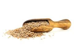 Fleawort seeds Stock Photo