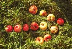 Flecha de manzanas en hierba Foto de archivo