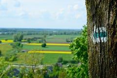 Flecha verde Foto de archivo libre de regalías