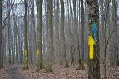 Flechas pintadas que indican la dirección en los árboles Fotos de archivo libres de regalías