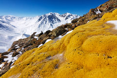 Flechte auf Felsen in den Winterbergen in Kazakhstan. Stockfotos