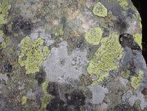Flechte der ukrainischen Karpaten Moos und Algen auf den Felsen Stockfotos