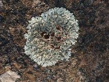 Flechte, die auf der weatherworn Oberfläche der GN, Detail wächst Stockfotos