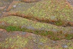 Flechte u. Moos auf rosafarbenem Granit Stockfotos