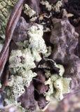 Flechte und Perlen des Taus auf einem alten Zaunposten stockfoto