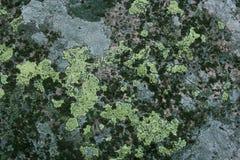 Flechten und Moos auf dem Granit stockbilder