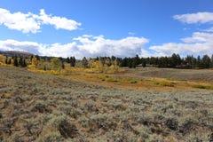 Flecken des Herbstes Stockfotografie