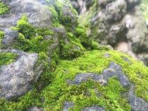 Flecken des Mooses bedeckten Felsen durch das Teehaus Lizenzfreies Stockfoto