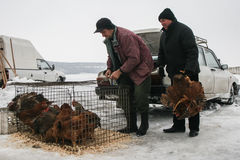 Flee market in winter. Calugareni, Romania, December 20, 2009: A man is selling chickens in the animal market in Calugareni. Before Christmas, animal breeders Stock Image