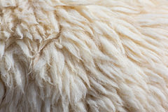 Fleece sheep background Stock Photos
