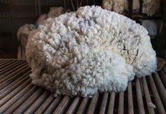Fleece of wool on wool classing table. Fleece of wool on wooden wool classing table Stock Images