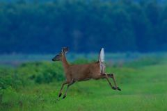 fleeing stock foto
