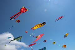 The Fleet. A group of kites of different sizes and shapes Stock Images