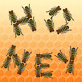 Fleet bees as text on honeycomb, top view Stock Images