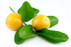 Fleisch-Orange Lizenzfreies Stockfoto