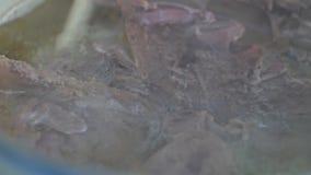 Fleisch wird im Wasser in einer Kasserollennahaufnahme gekocht Lebensmittelfleisch-Suppenkochen stock video footage