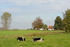 Flemish countryside Stock Photos