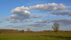 Flemish famland landscape with cumulus clouds. Flemish famland landscape with meadows and trees and blue sky with cumulus clouds Royalty Free Stock Photography