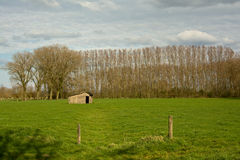 Flemish landscape: meadow with shed and line of trees Royalty Free Stock Photo