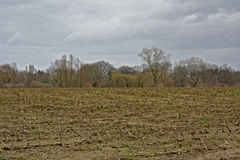 Flemish winter farmscape. Flemish winter farmland landscape on a cloudy day, a field with stubbles and bare trees in the background Royalty Free Stock Photos