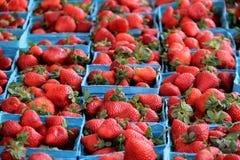 Flera blåa behållare som fylls med nya valda jordgubbar som visas på lokala bönder, marknadsför Royaltyfri Bild