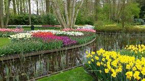 Flera blommor runt om ett damm i Keukenhof Royaltyfria Bilder