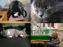 Flera inhemska katter Arkivfoto