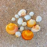 Flera snäckskal av olika former i sanden på havskusten royaltyfri foto