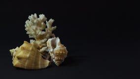 Flera snäckskal på en mörk bakgrund Royaltyfri Fotografi