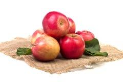 Flera stora mogna äpplen på säckväv Royaltyfri Foto