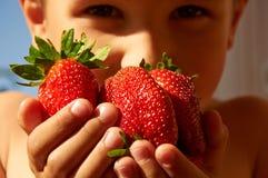 Flera stora röda mogna jordgubbar i pojkes händer Arkivfoton