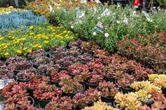 Flera variationer av suckulenter och blommor royaltyfri foto