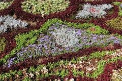 Flerfärgad dekorativ blomsterrabatt vektor för detaljerad teckning för bakgrund blom- Arkivfoto