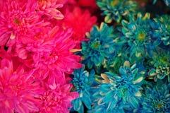 Flerfärgade blommor #2 Arkivbilder