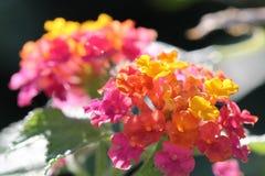 Flerfärgade blommor Arkivbild