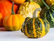 Flerfärgade halloween pumpor Fotografering för Bildbyråer