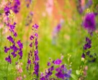 Flerfärgade sommarträdgårdblommor Arkivfoton