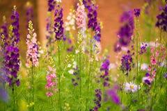 Flerfärgade sommarträdgårdblommor Fotografering för Bildbyråer