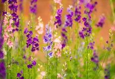 Flerfärgade sommarträdgårdblommor Royaltyfria Foton