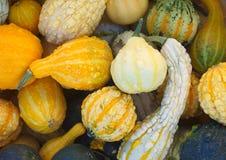 Flerfärgade squashpumpor på marknaden för halloween eller tacksägelse Arkivfoto