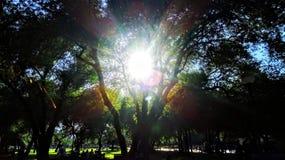 Flerfärgat spektrum Arkivfoto