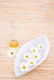 Fles van essentiële olie en madeliefjes stock afbeeldingen