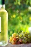 Fles wijn en grappes. Stock Fotografie
