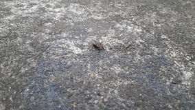 Flesh Fly. Creeping on the cement floor Stock Images