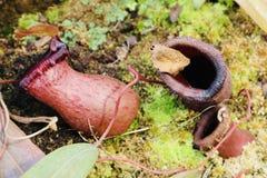 Flesh and fly eating plant close up botanic garden royalty free stock photo