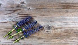Fleshly cut purple spring wild flowers on rustic wood background Stock Photos
