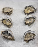Fleshly opened oysters Royalty Free Stock Image