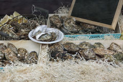 Fleshly opened oysters Royalty Free Stock Photography